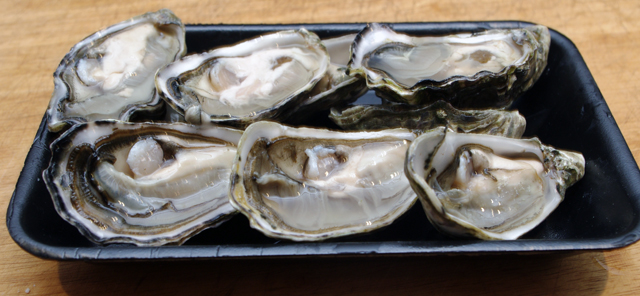 shucked oysters.jpg